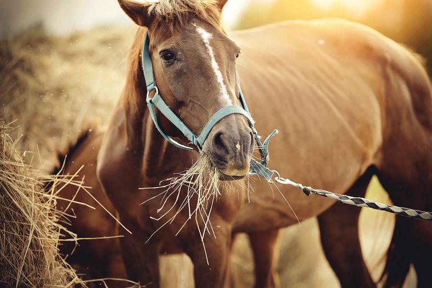 ló etető